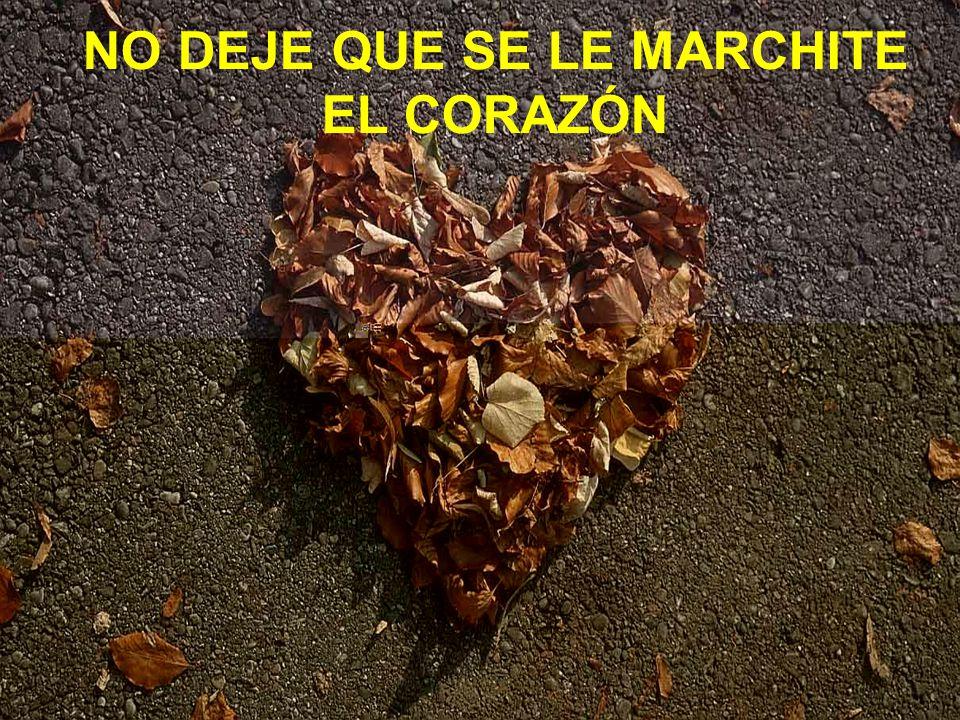 NO DEJE QUE SE LE MARCHITE EL CORAZÓN