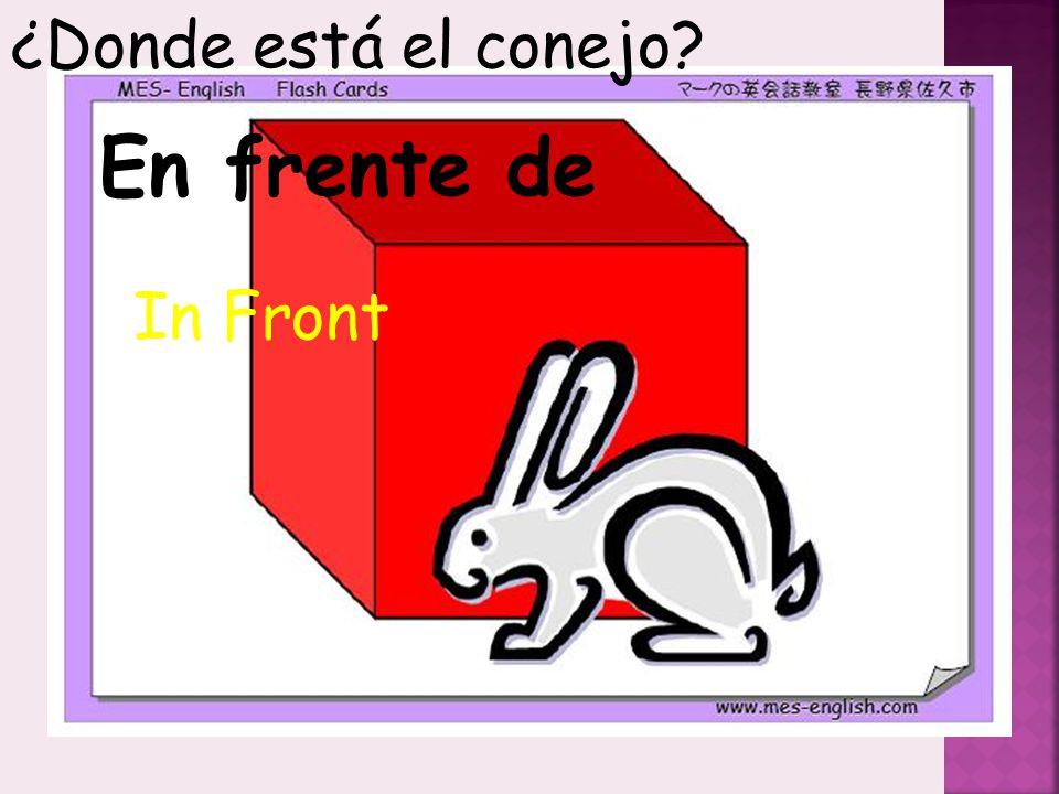 ¿Donde está el conejo En frente de In Front
