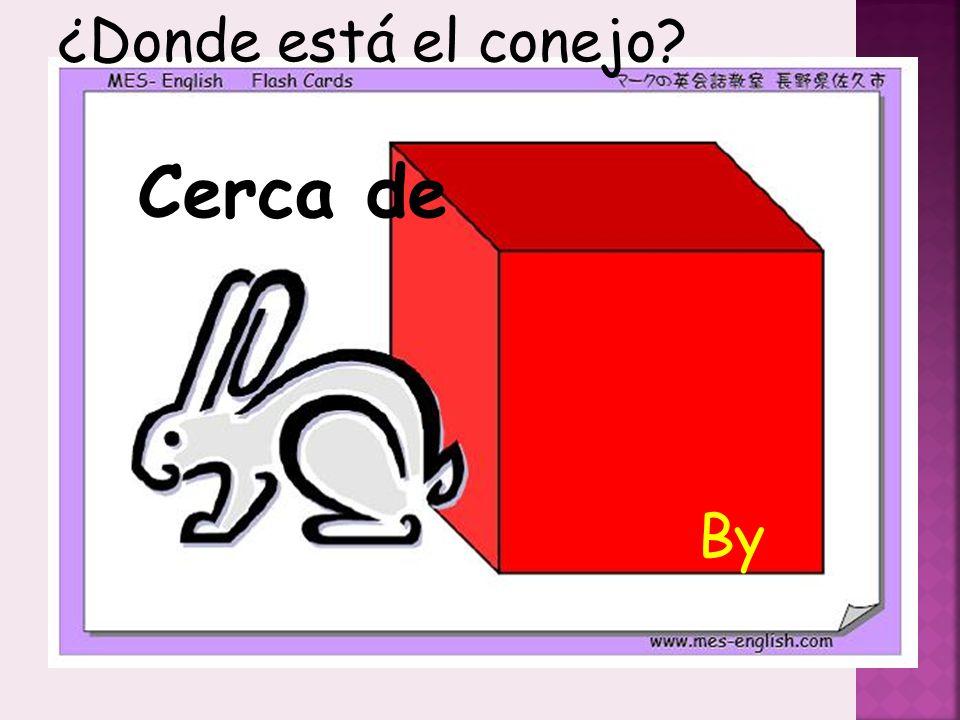 ¿Donde está el conejo Cerca de By