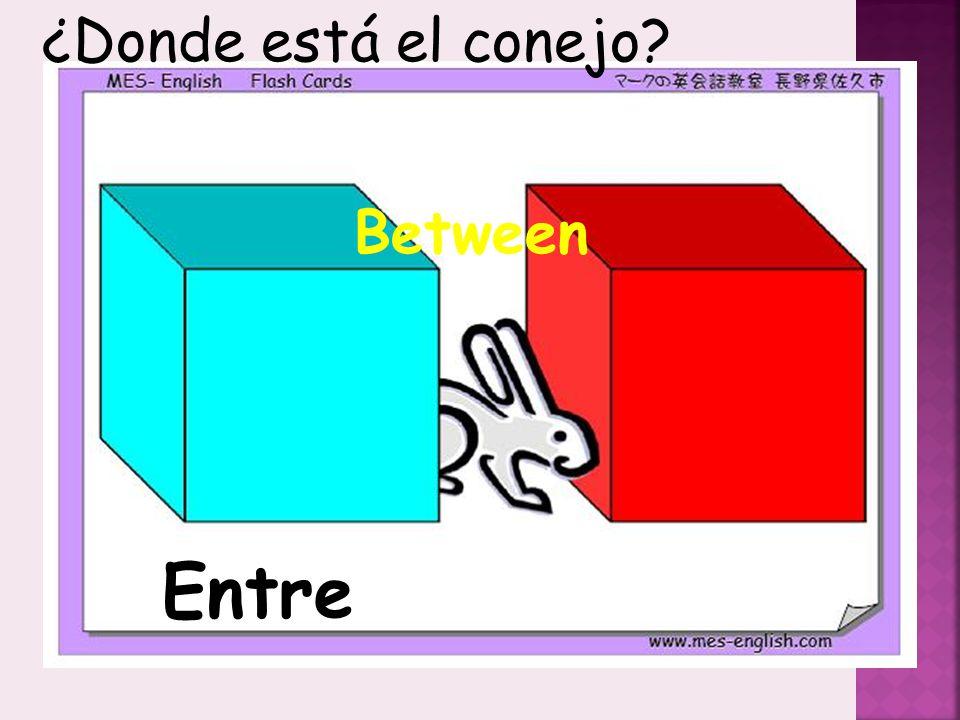 ¿Donde está el conejo Between Entre