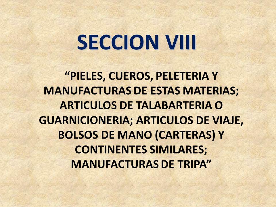 SECCION VIII