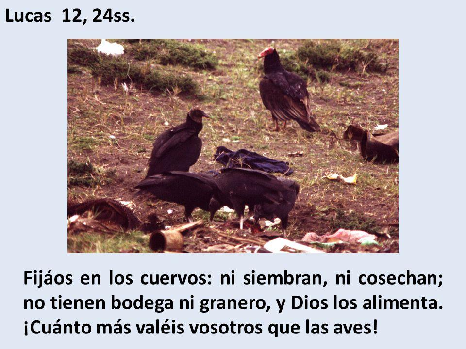Lucas 12, 24ss.
