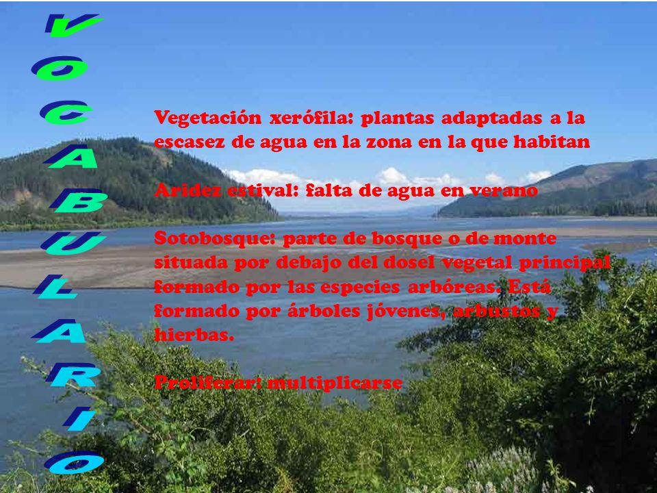 Vegetación xerófila: plantas adaptadas a la escasez de agua en la zona en la que habitan