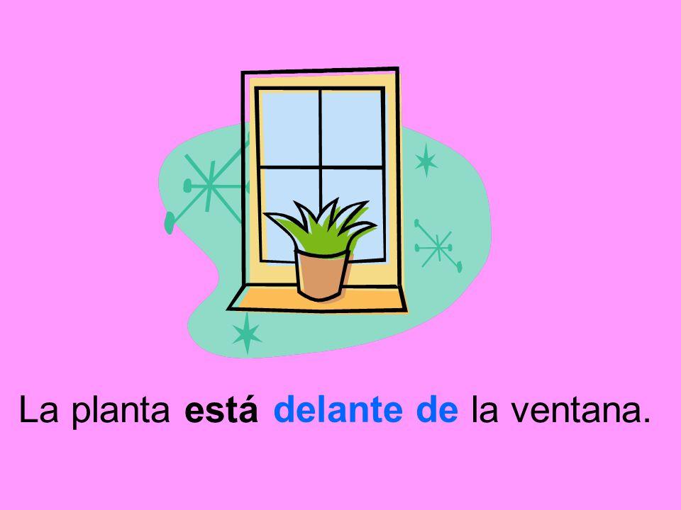 La planta está la ventana.