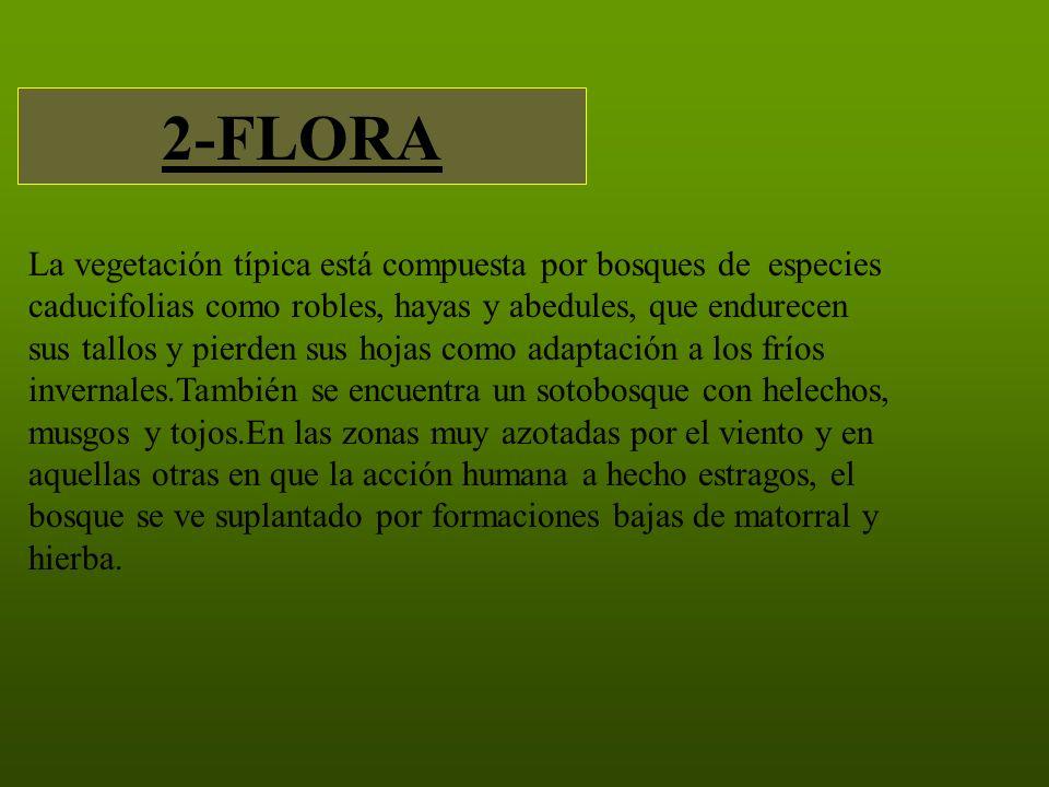 2-FLORA