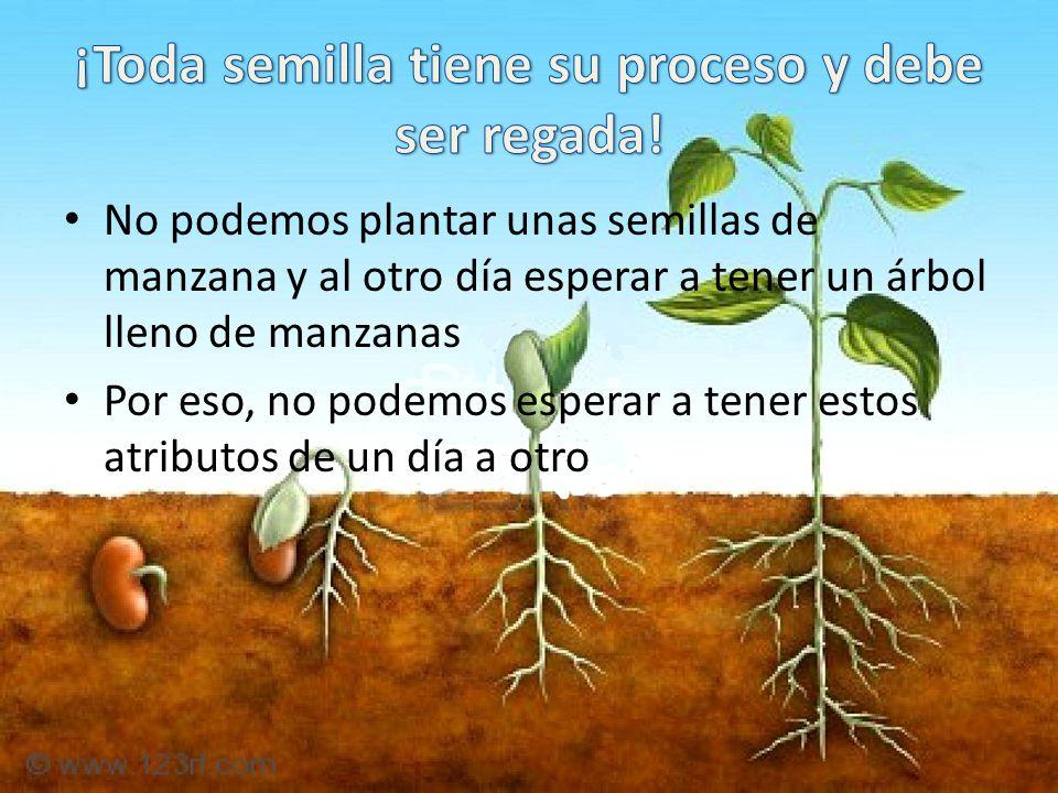 ¡Toda semilla tiene su proceso y debe ser regada!