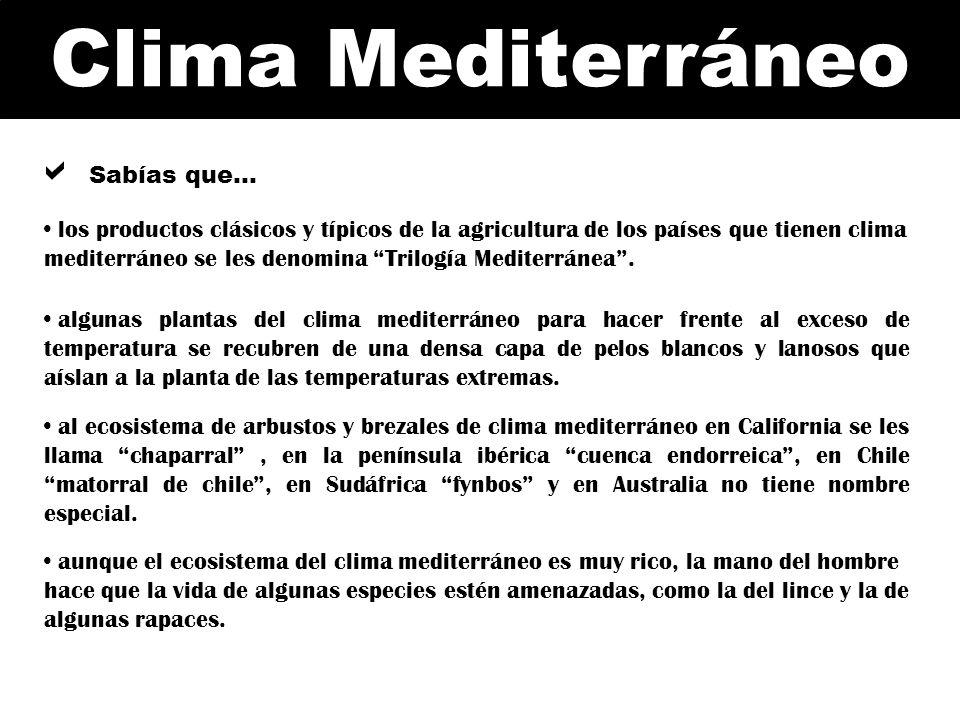 Sabías que… los productos clásicos y típicos de la agricultura de los países que tienen clima mediterráneo se les denomina Trilogía Mediterránea .