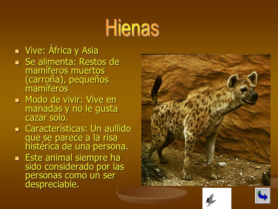 Hienas Vive: África y Asia