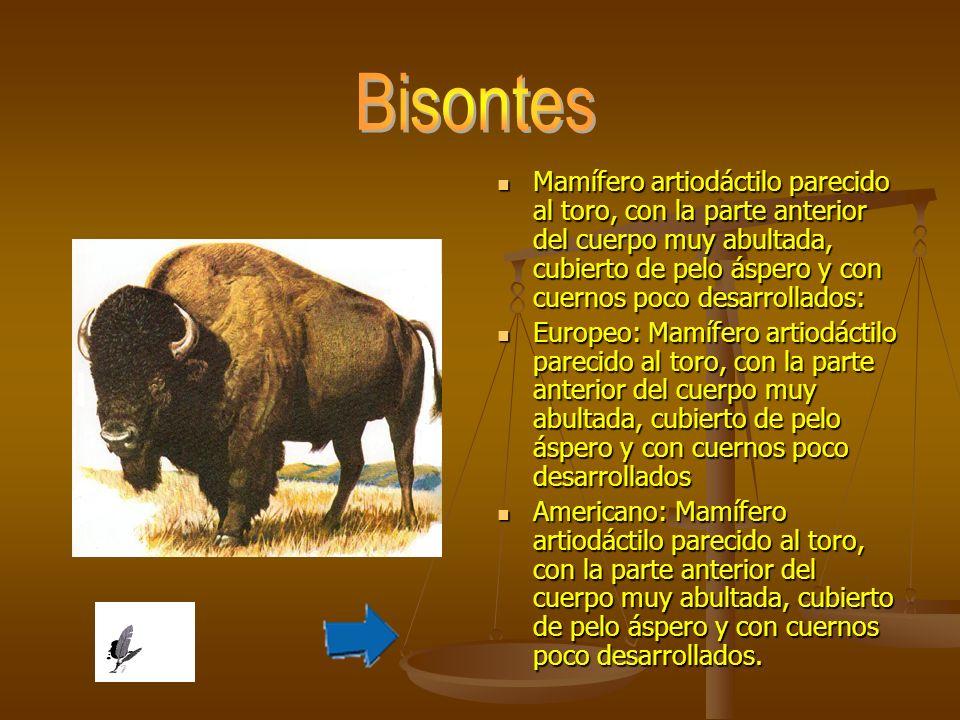 Bisontes