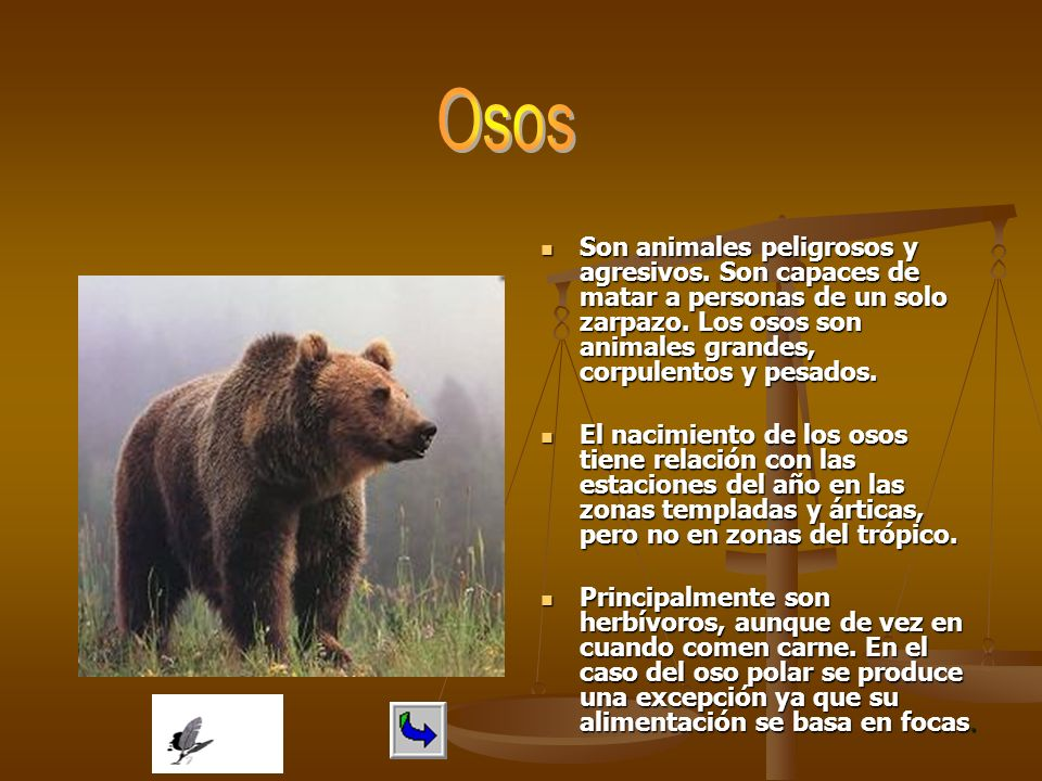 Osos Son animales peligrosos y agresivos. Son capaces de matar a personas de un solo zarpazo. Los osos son animales grandes, corpulentos y pesados.