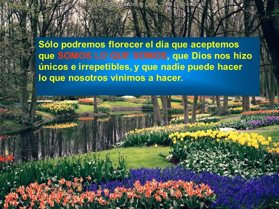 Sólo podremos florecer el día que aceptemos