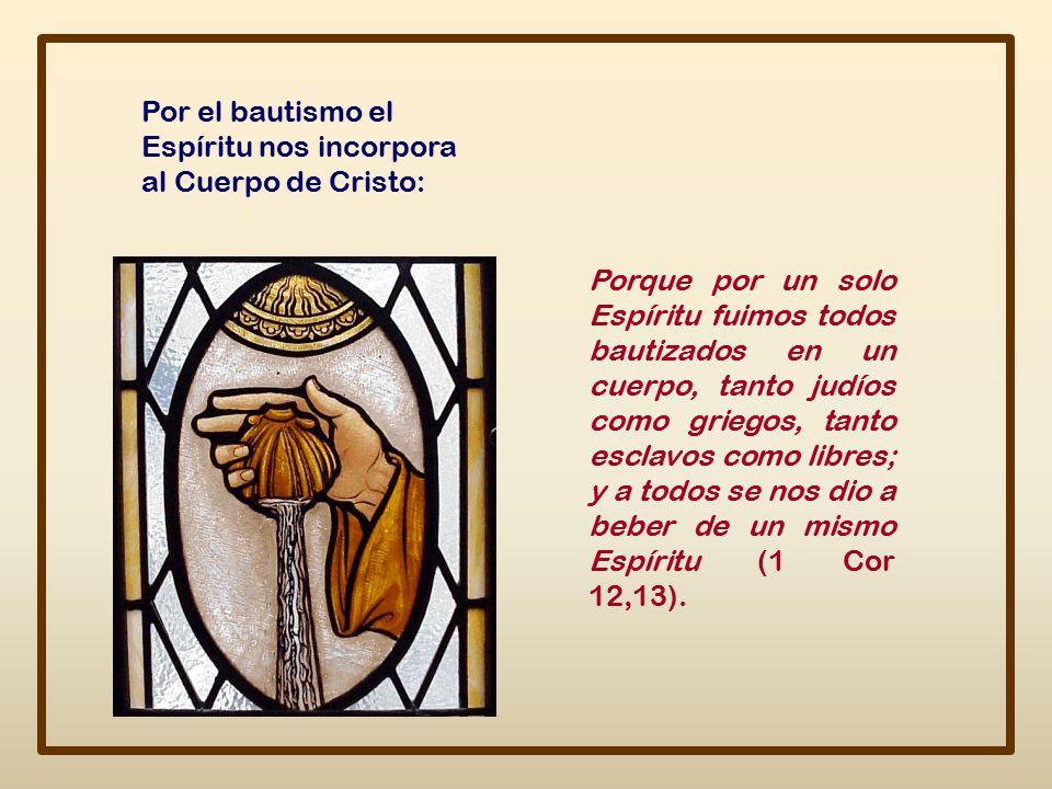 Por el bautismo el Espíritu nos incorpora al Cuerpo de Cristo: