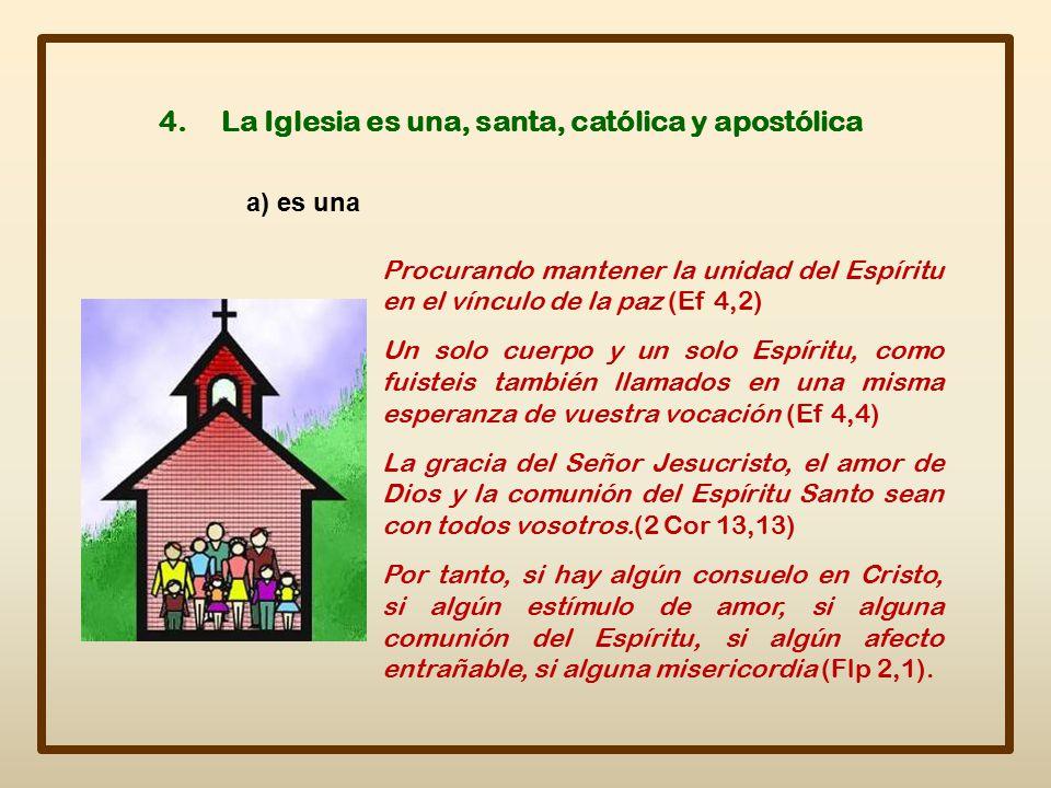 4. La Iglesia es una, santa, católica y apostólica