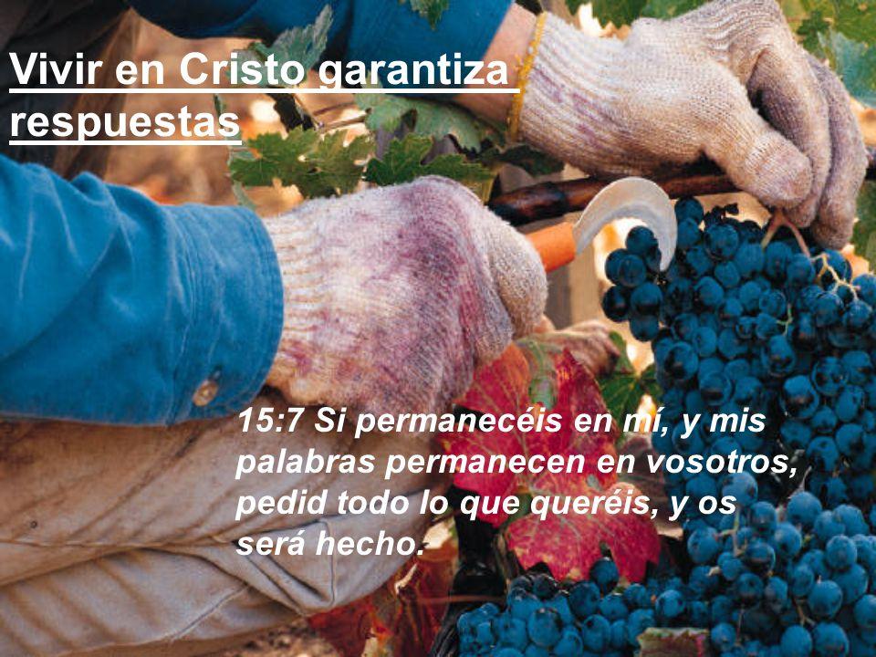 Vivir en Cristo garantiza respuestas
