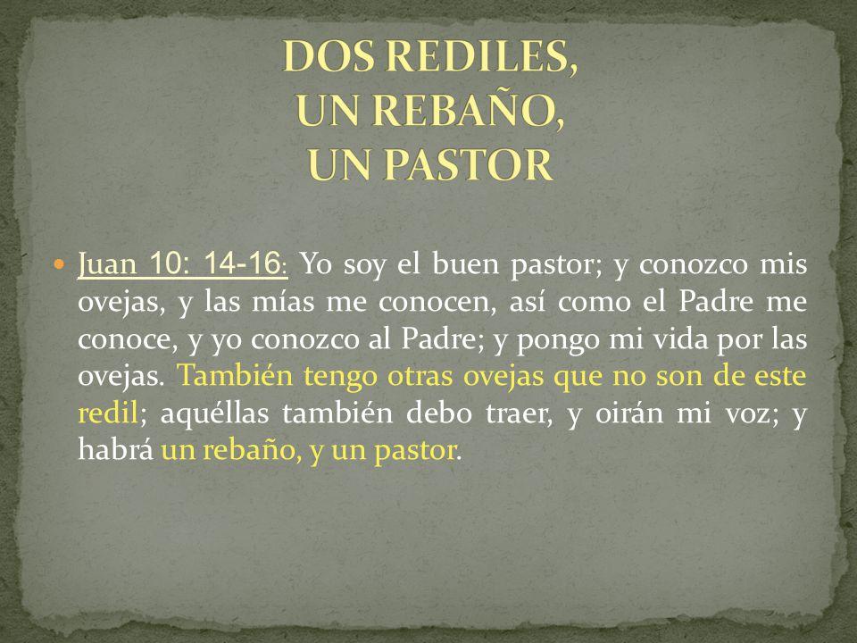 DOS REDILES, UN REBAÑO, UN PASTOR