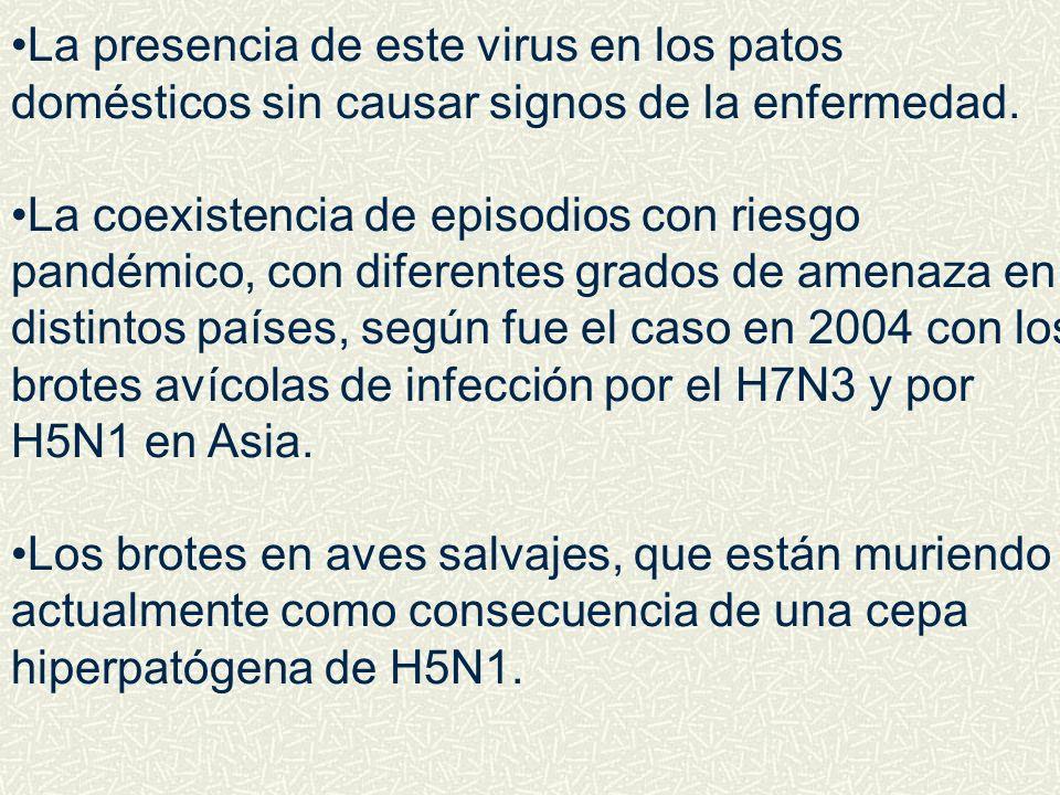 La presencia de este virus en los patos domésticos sin causar signos de la enfermedad.