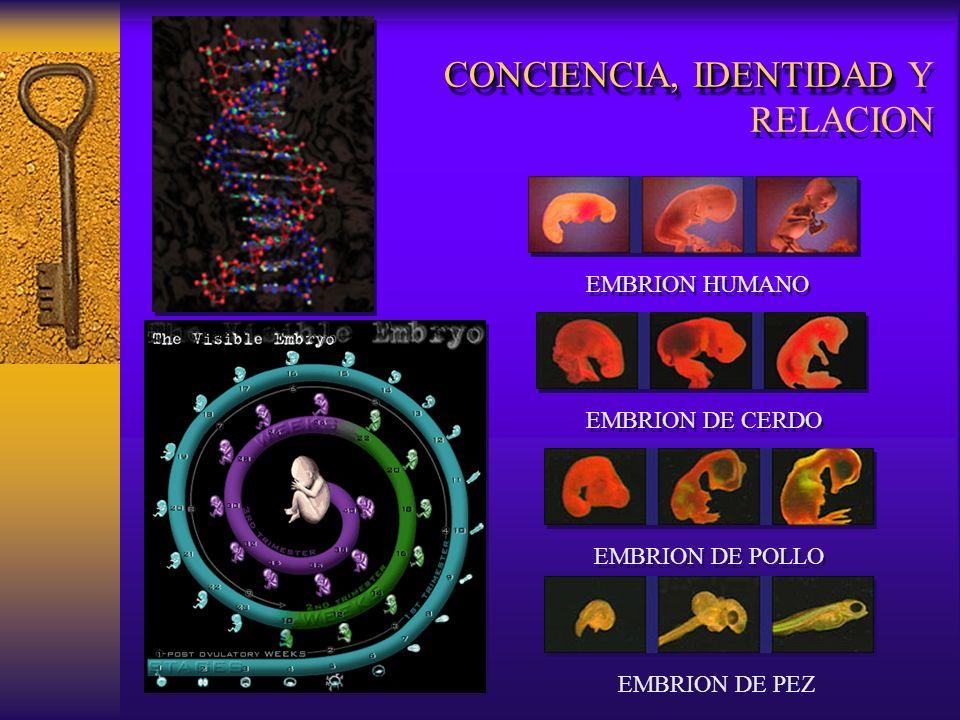 CONCIENCIA, IDENTIDAD Y RELACION