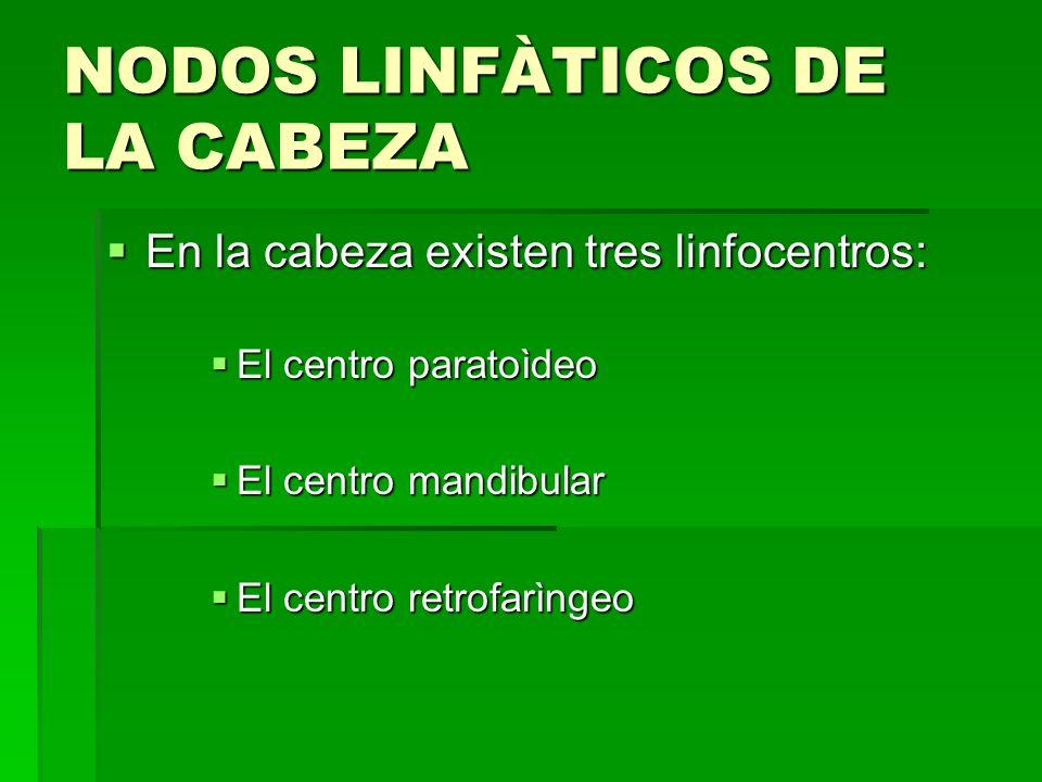 NODOS LINFÀTICOS DE LA CABEZA