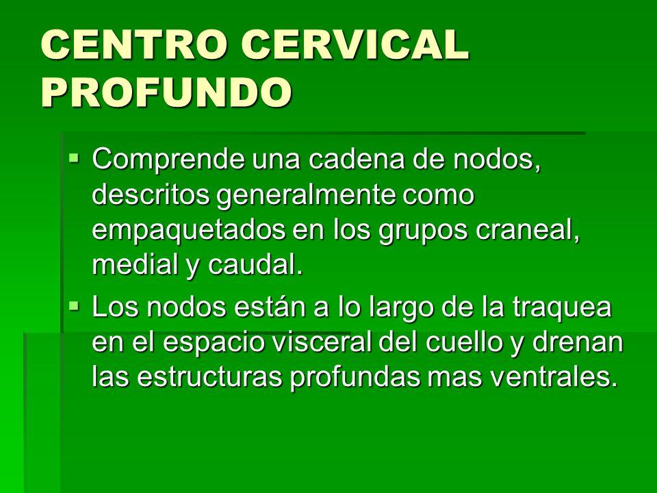 CENTRO CERVICAL PROFUNDO