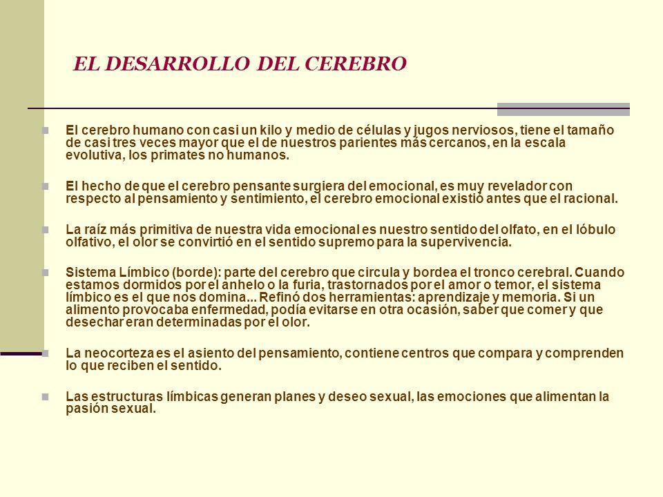 EL DESARROLLO DEL CEREBRO