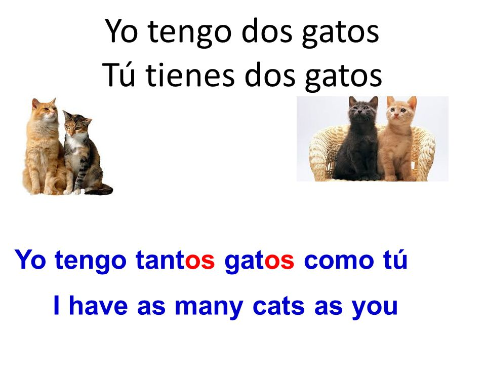 Yo tengo dos gatos Tú tienes dos gatos