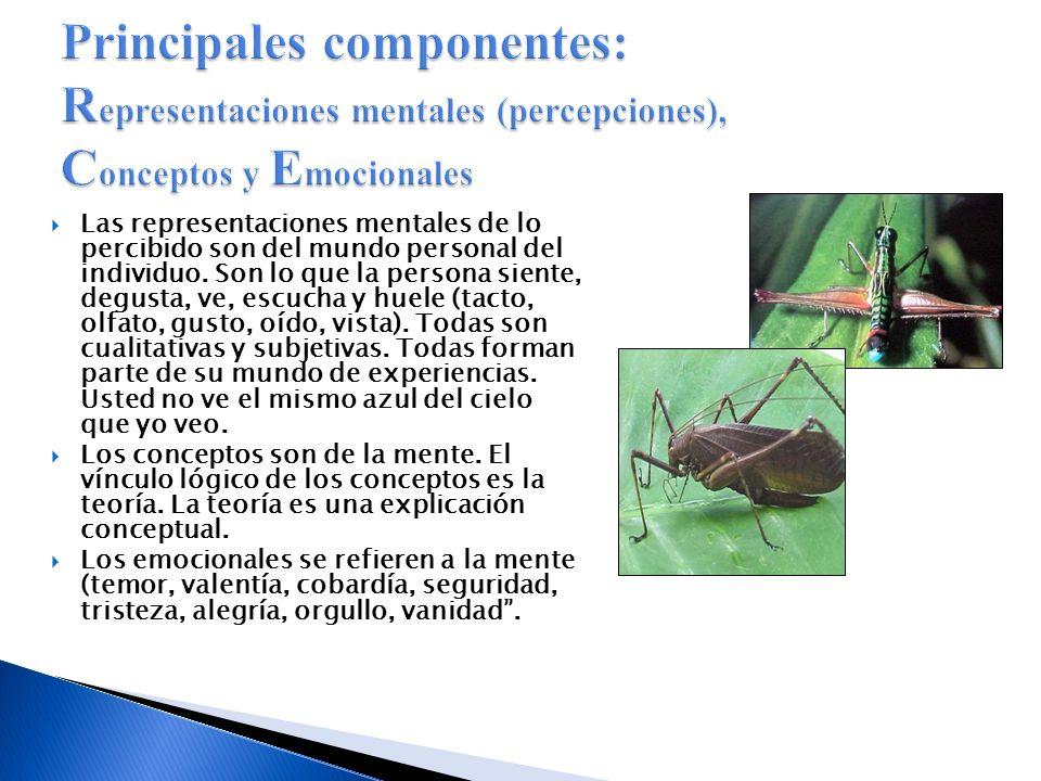 Principales componentes: Representaciones mentales (percepciones), Conceptos y Emocionales