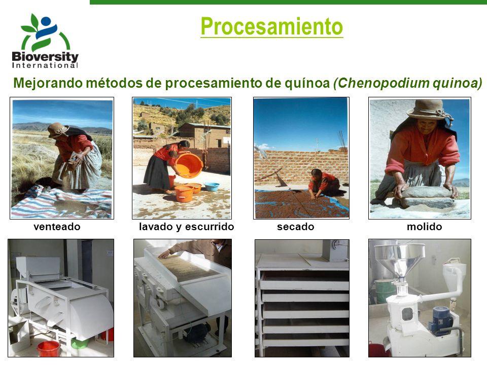ProcesamientoMejorando métodos de procesamiento de quínoa (Chenopodium quinoa) venteado. lavado y escurrido.