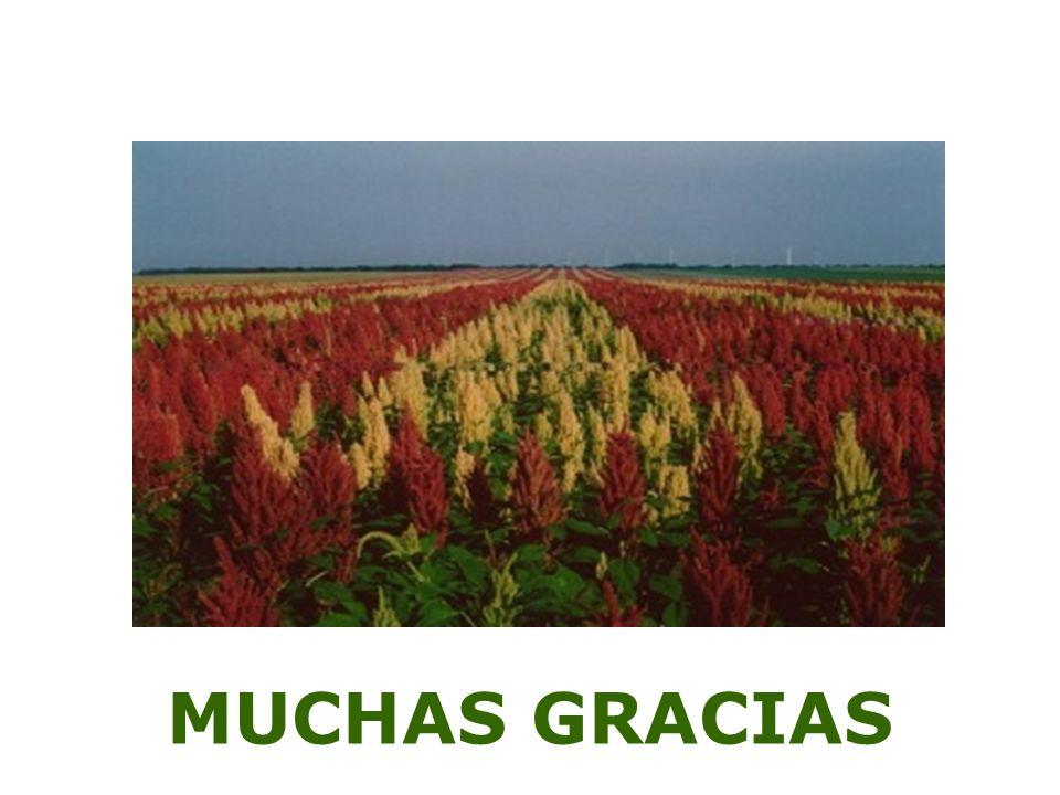 MUCHAS GRACIAS 33