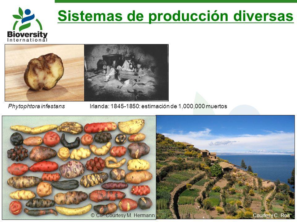 Sistemas de producción diversas