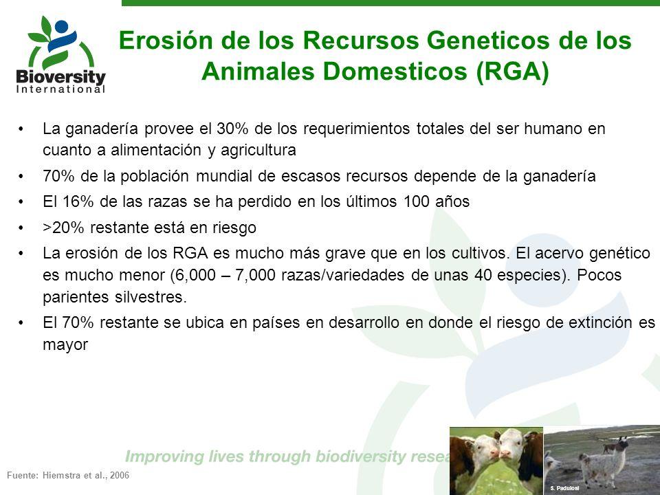 Erosión de los Recursos Geneticos de los Animales Domesticos (RGA)