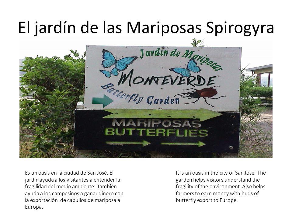 El jardín de las Mariposas Spirogyra