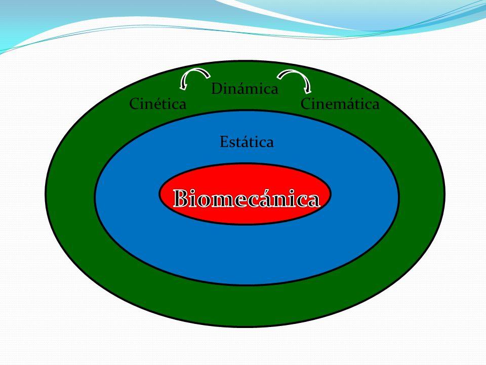 Dinámica Cinética Cinemática Estática Biomecánica