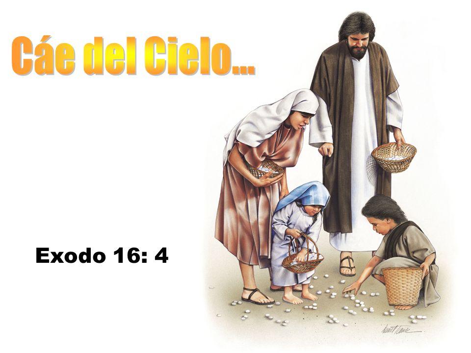 Cáe del Cielo... Exodo 16: 4