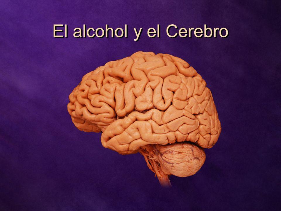 El alcohol y el Cerebro