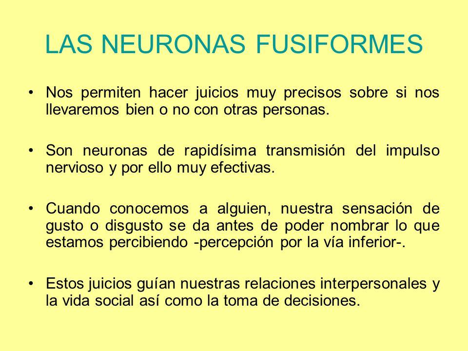 LAS NEURONAS FUSIFORMES