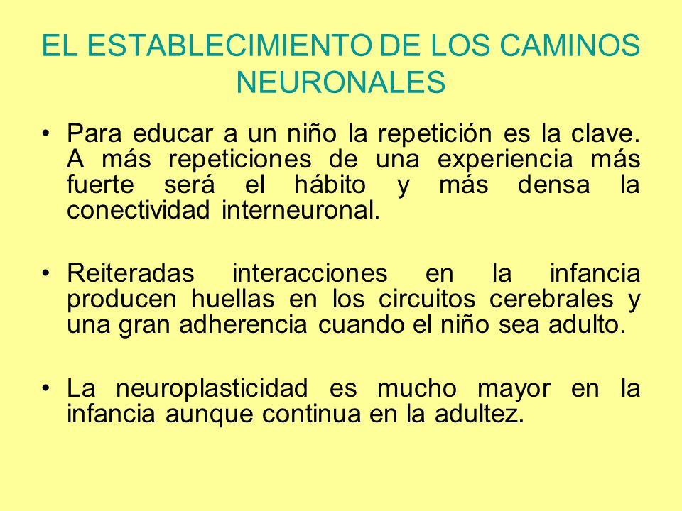 EL ESTABLECIMIENTO DE LOS CAMINOS NEURONALES