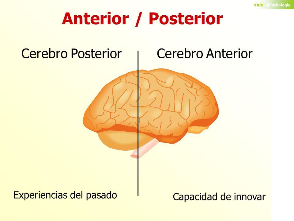 Anterior / Posterior Cerebro Posterior Cerebro Anterior
