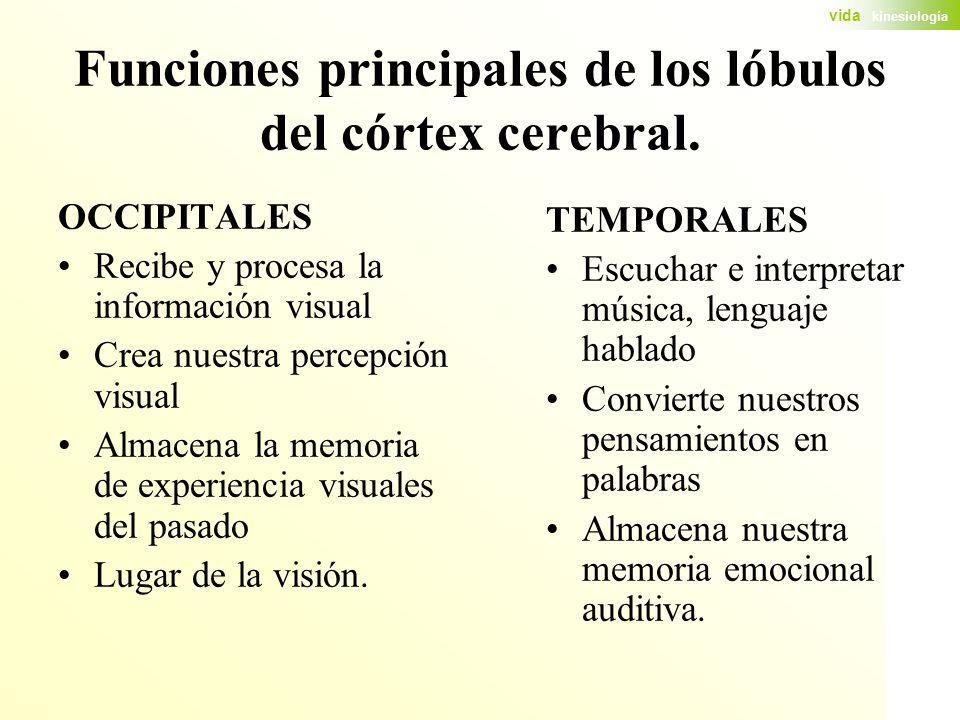 Funciones principales de los lóbulos del córtex cerebral.