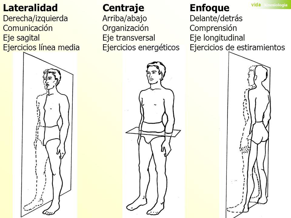 Enfoque Delante/detrás Comprensión Eje longitudinal Ejercicios de estiramientos