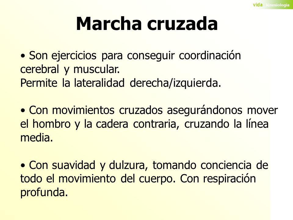 Marcha cruzada Son ejercicios para conseguir coordinación cerebral y muscular. Permite la lateralidad derecha/izquierda.