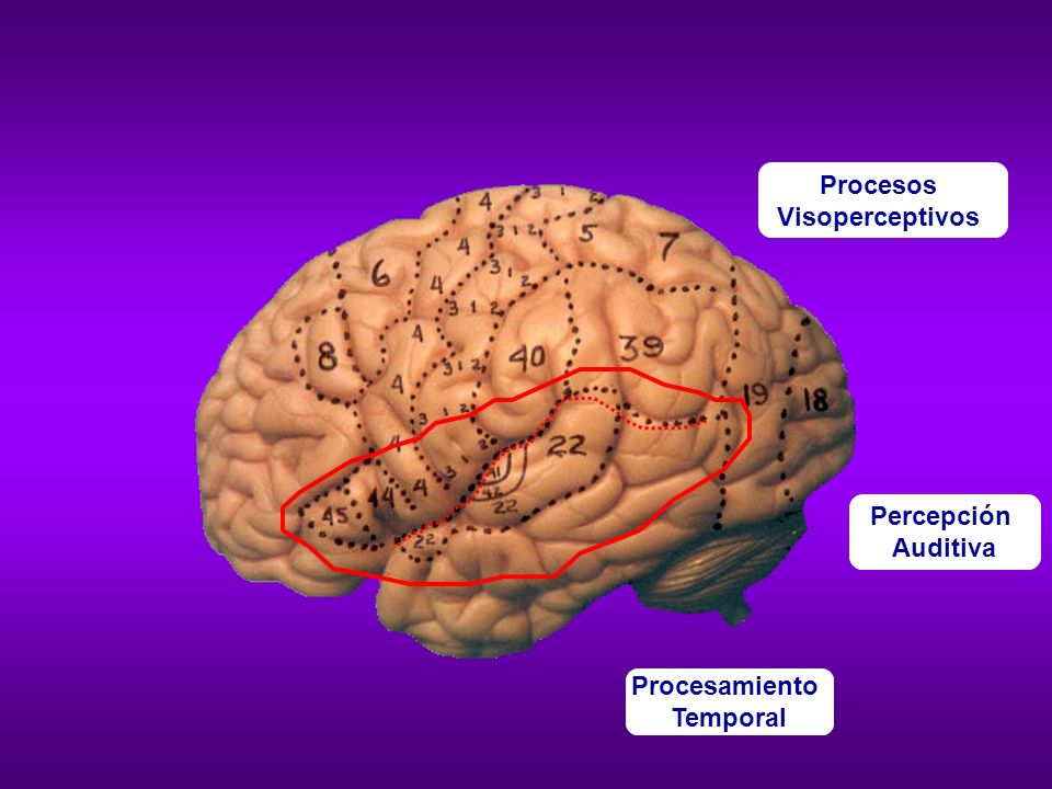 Procesos Visoperceptivos Percepción Auditiva Procesamiento Temporal