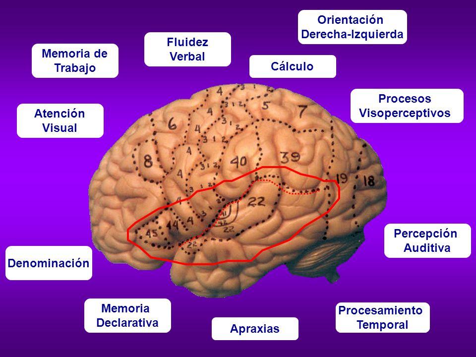 OrientaciónDerecha-Izquierda. Fluidez. Verbal. Memoria de. Trabajo. Cálculo. Procesos. Visoperceptivos.