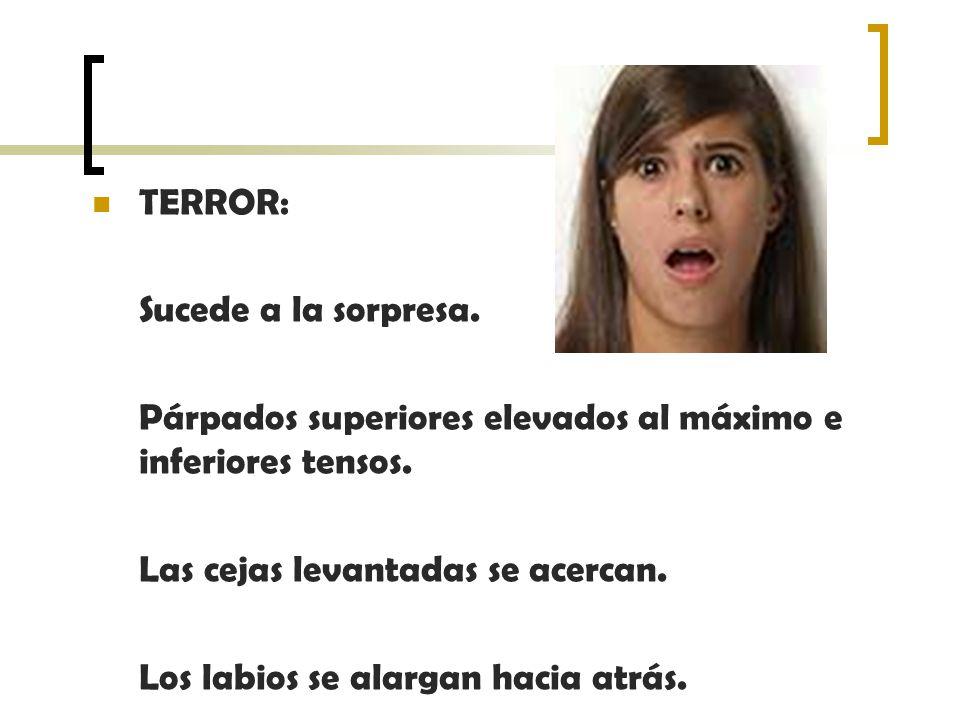 TERROR: Sucede a la sorpresa. Párpados superiores elevados al máximo e inferiores tensos. Las cejas levantadas se acercan.