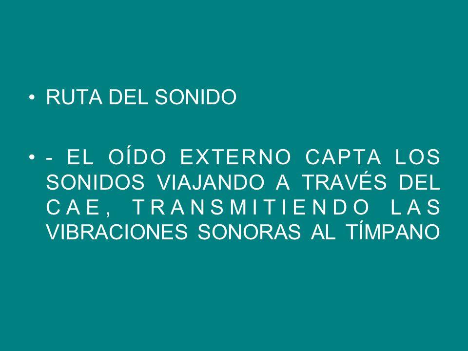 RUTA DEL SONIDO - EL OÍDO EXTERNO CAPTA LOS SONIDOS VIAJANDO A TRAVÉS DEL CAE, TRANSMITIENDO LAS VIBRACIONES SONORAS AL TÍMPANO.
