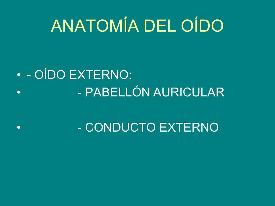 ANATOMÍA DEL OÍDO - OÍDO EXTERNO: - PABELLÓN AURICULAR