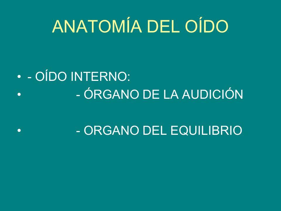 ANATOMÍA DEL OÍDO - OÍDO INTERNO: - ÓRGANO DE LA AUDICIÓN