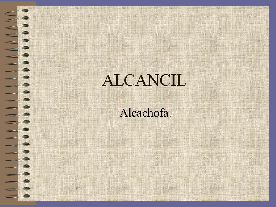 ALCANCIL Alcachofa.