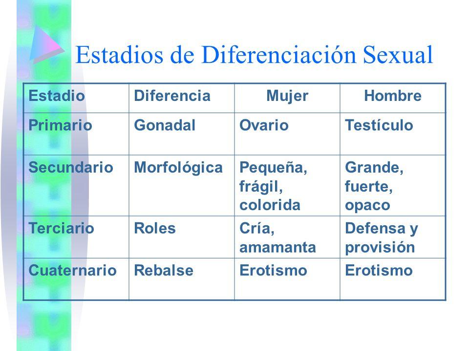 Estadios de Diferenciación Sexual