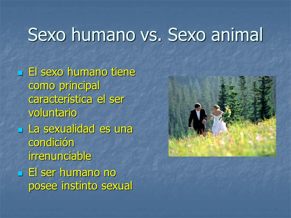 Sexo humano vs. Sexo animal