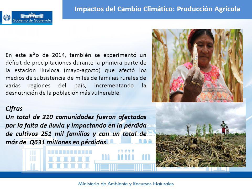 Impactos del Cambio Climático: Producción Agrícola